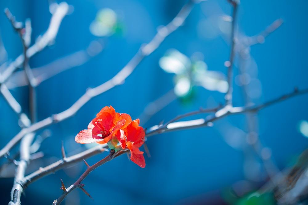 道端の赤い花